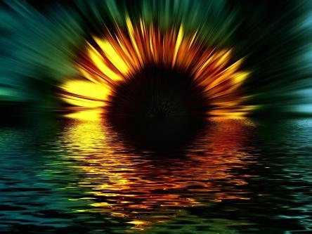 sunflower_sunset